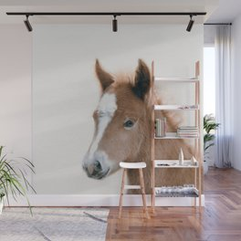 Baby Foal, Baby Animals Art Print By Synplus Wall Mural