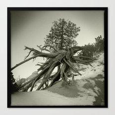 Tree at Tent Rocks Canvas Print