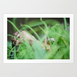 Duck hiding in the grass, Marrum, Friesland - The netherlands Art Print