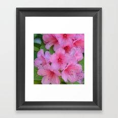 Pretty Azaleas Framed Art Print