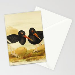 White breasted Oyster catcher Sooty Oyster catcher4 Stationery Cards