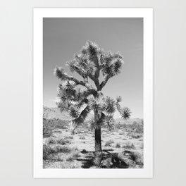 Joshua Tree Monochrome, No. 3 Art Print