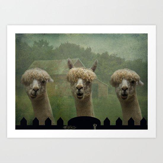 Alpaca Farm Art Print