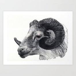 Goat head Art Print