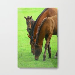 Horse Family with a Young Foal in Spring Metal Print