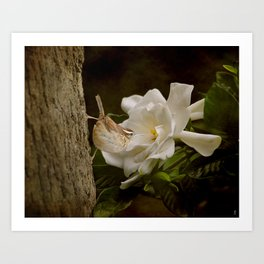 The Scent of the Gardenia Art Print