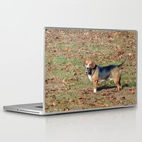 beagle Laptop & iPad Skins featuring Beagle by Frankie Cat