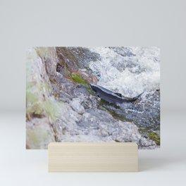 atlantic salmon Mini Art Print
