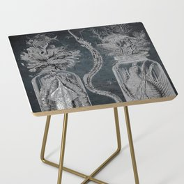 Victorian Zoological Study, Ocean life Specimens - Vintage Art Collage Side Table