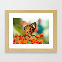 Leopard Lacewing Butterfly Framed Art Print