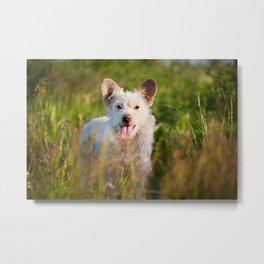 Single white stray tyke dog at the meadow Metal Print