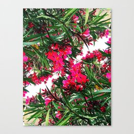 Flowers at the Vatican Canvas Print