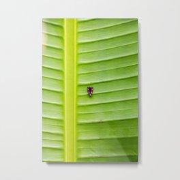 Alone on the leaf. Metal Print