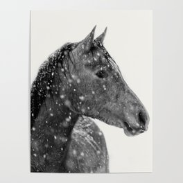 Horse Animal Photography Poster
