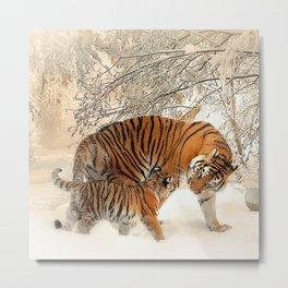 Tiger_2015_0125 Metal Print