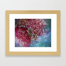 Bottlebrush Framed Art Print
