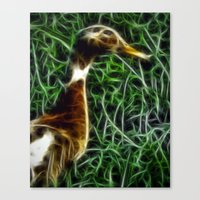 duck Canvas Prints featuring Duck by Phil Flaig