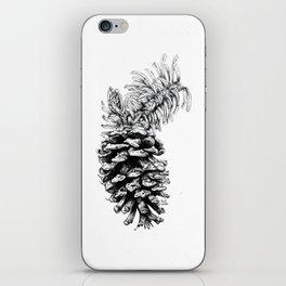 Pinus aristata iPhone Skin