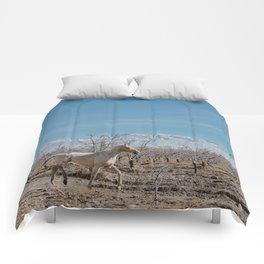 white horse Bolivia Comforters