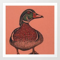 wood duck Art Print