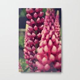 Pink Summer Foxglove Metal Print