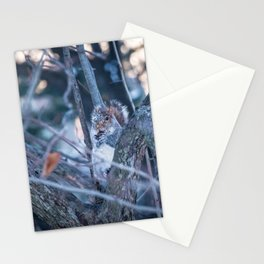 Squirrel eating on sunset during winter Stationery Cards
