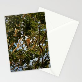 First of the Forest Stationery Cards