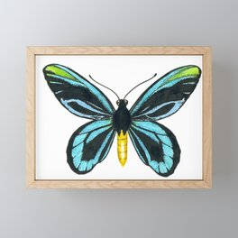 Queen Alexandra' s birdwing butterfly Framed Mini Art Print