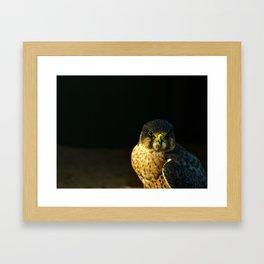 Captain Falcon Framed Art Print