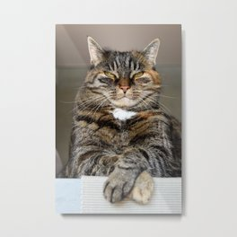 Unimpressed Cat Metal Print