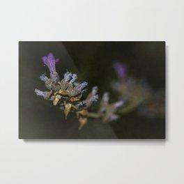 Wild flowers #106 Metal Print