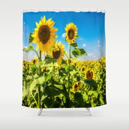Three's Company - Trio of Sunflowers in Kansas Shower Curtain