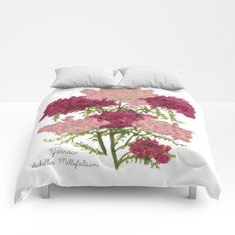 Yarrow: Achillea Millefolium Comforters