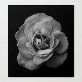 flower head Canvas Print