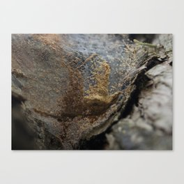 The abstract art of Mother Nature Canvas Print