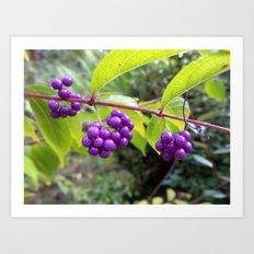 Purple Passion Art Print