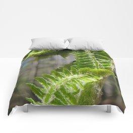 Fiddlehead Fern Comforters