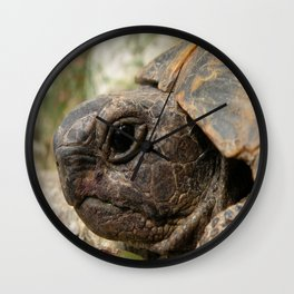 Close Up Side Portrait Of A Turkish Tortoise Wall Clock