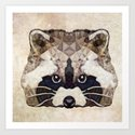 Racoon by ancello