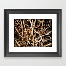 Nested In Thorns Framed Art Print