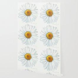 Watercolor Daisy Wallpaper