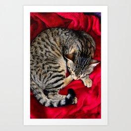 Cute Tabby Cat napping Art Print