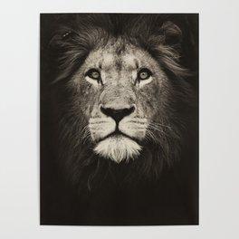 Mr. Lion King Poster