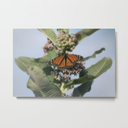 Monarch Butterfly VIII Metal Print
