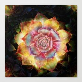 Sempervivum stone plant Canvas Print