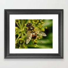 Bee? Framed Art Print