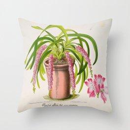 Aerides Affine Var Roseum Vintage Botanical Floral Flower Plant Scientific Throw Pillow
