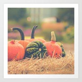 Autumn Photography - Pumpkins On A Field Art Print