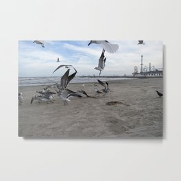 Birds by The Bay Metal Print