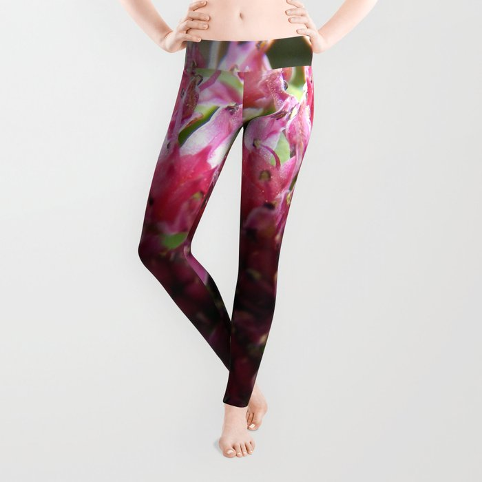 Sedum Flowers and the Ant Leggings
